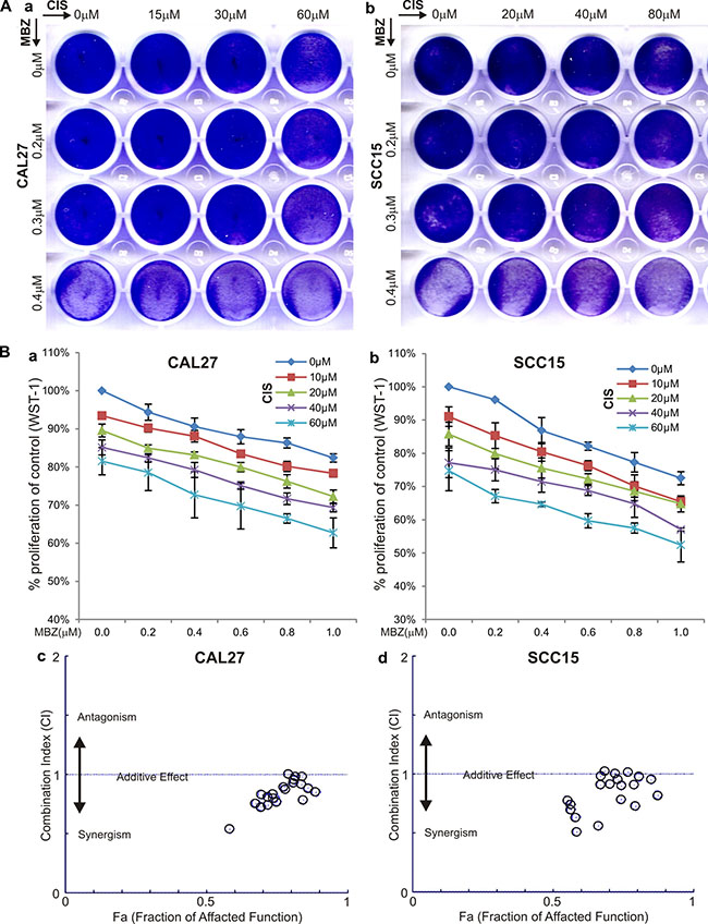 MBZ synergizes with cisplatin (CIS) in suppressing cell proliferation.