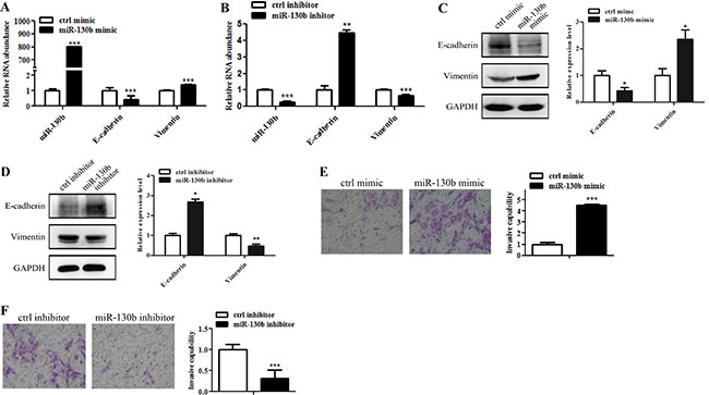 MiR-130b induces EMT-like change and invasion of glioma cells.