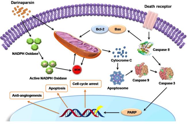 Effects of Darinaparsin (DAR) on Cellular Functions.