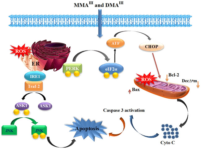 Toxicity and Anticancer Effects of MMA