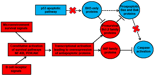 Schematic representation of the impaired mitochondrial caspase-dependent apoptosis in CLL cells.