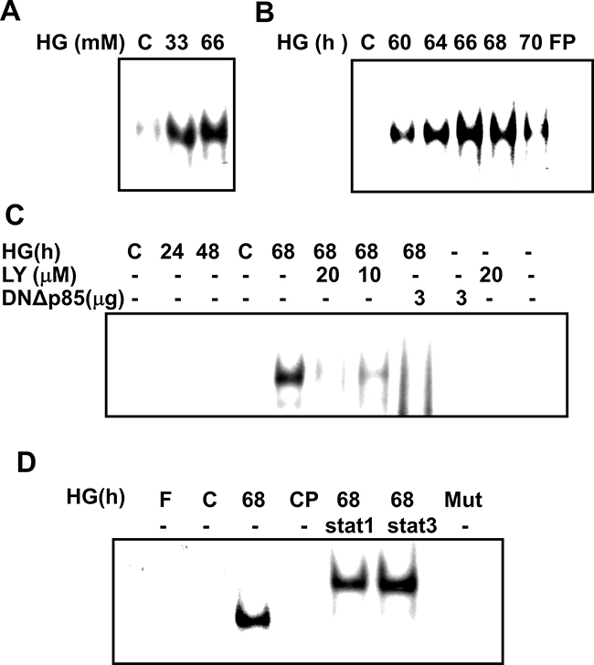 Time-dependent response of high glucose-induced SOCS-3 binding activation in RMCs.