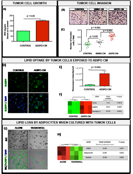 Bone marrow adipocyte-supplied lipids stimulate proliferation and invasion of prostate tumor cells and upregulate genes involved in fatty acid transport.