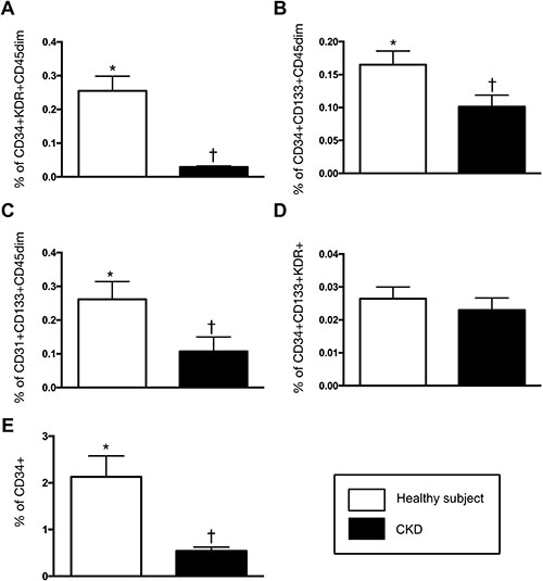 Comparison of circulating level of endothelial progenitor cells (EPCs) and hematopoietic stem cell (CD34+) between CDK (n = 10) and health-control (n = 10) groups.