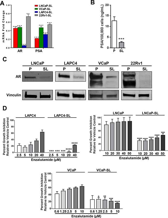 Androgen Receptor axis down-regulation in developmentally reprogrammed PCa cells.