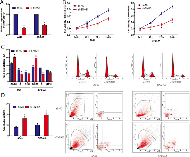 LncRNA SNHG1 inhibition suppressed NSCLC cell proliferation in vitro.
