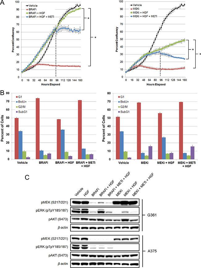 MET inhibition attenuates HGF rescue of BRAF and MEK inhibitors in G361 BRAFV600E mutant melanoma cells.