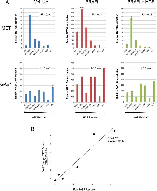 Fold increase in MET following BRAFi treatment predicts for strength of HGF rescue in BRAFV600E mutant melanoma cells.