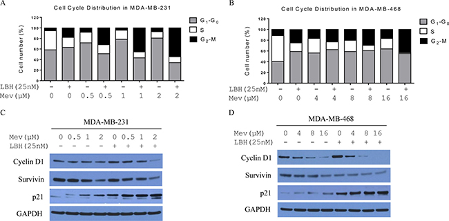 Mevastatin enhances LBH589-induced G2-M arrest in TNBC cells.