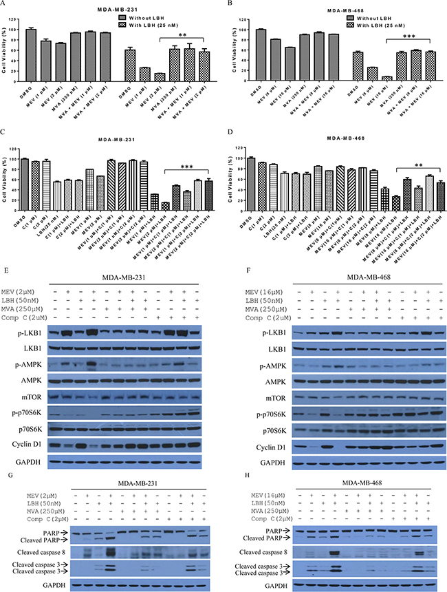 The mevalonate pathway is involved in mevastatin enhancement of LBH-induced TNBC cell death.