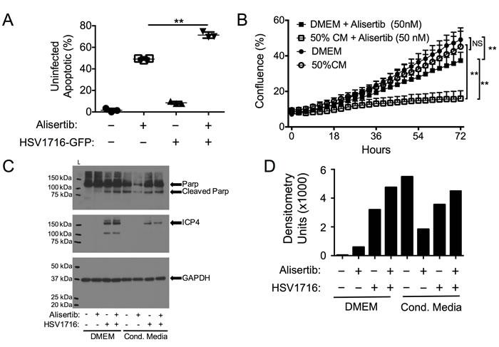 Virus-Induced Therapeutic Adjuvant (VITA) sensitizes target cells to alisertib therapy.
