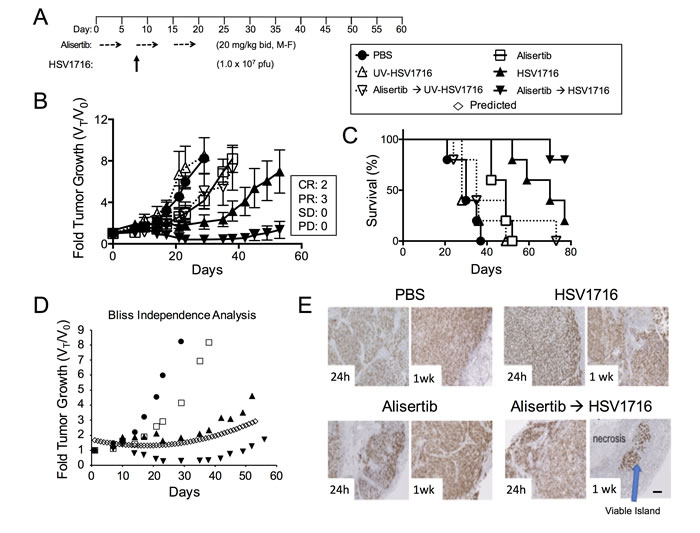 Alisertib and HSV1716 are synergistic in MPNST xenografts.