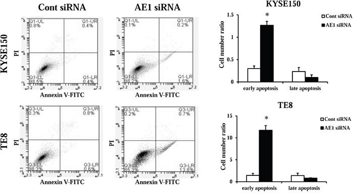 AE1 controls the survival of ESCC cells.