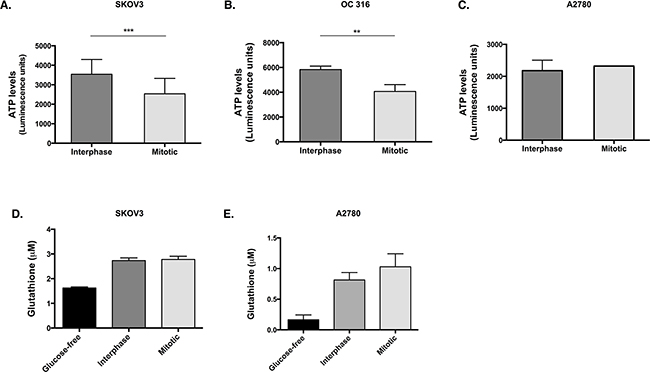 ATP levels are reduced and GSH levels are unchanged in cells that lose AKT activity during paclitaxel-induced mitotic arrest.