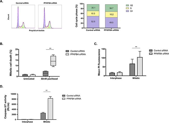 PFKFB4 depletion increases death of mitotically arrested SKOV3 cells.