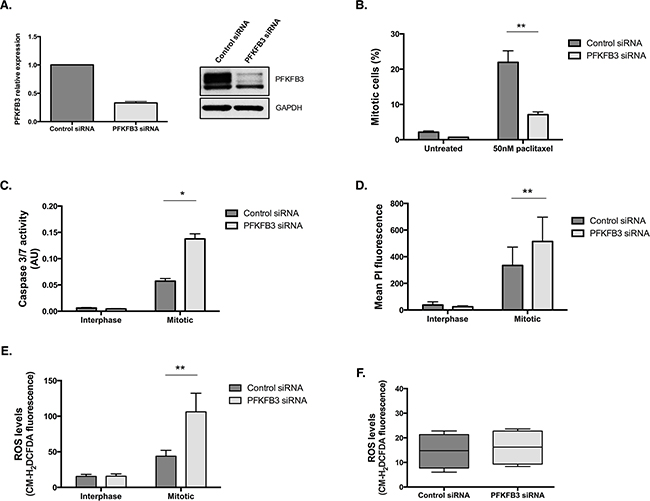PFKFB3 is important for cell survival during paclitaxel-induced mitotic arrest.