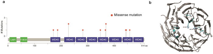 Schematic representation of mutations in TBL1XR1.