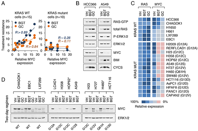 Suppression of MYC enhances the sensitivity of cancer cells to cytotoxic agents.