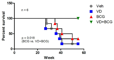 BCG+1,25-VD increases the survival rate of BBN-induced BCa mice.