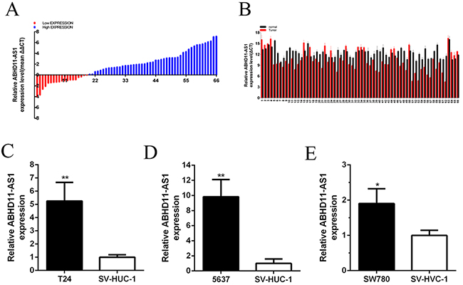 ABHD11-AS1 was overexpressed in bladder cancer tissues and cell lines.