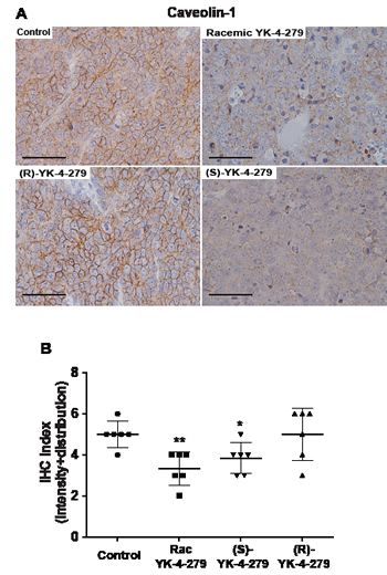 EWS-FLI1 target caveolin-1 expression reduced by racemic and (S)-YK-4-279 treated tumors.