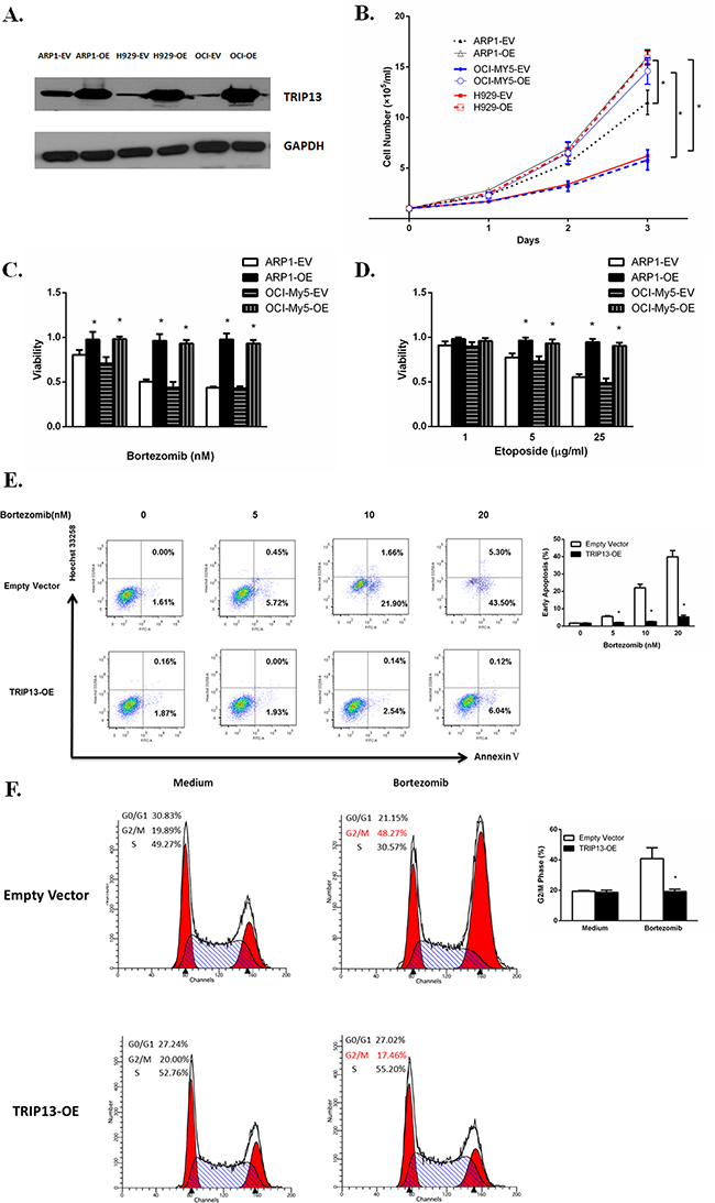 Increased TRIP13 induces cell growth and drug resistance.
