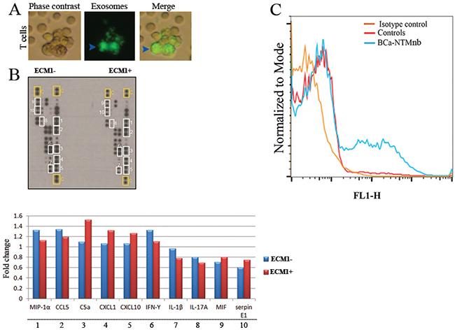 Cytokine profiling and exosome production analysis.