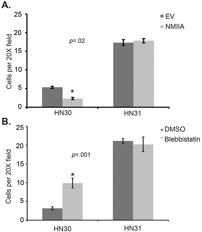 Modulation of NMIIA expression or function alters wtp53 expressing cell invasion.