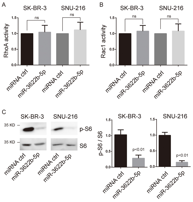 MiR-3622b-5p suppresses mTORC1 signaling.