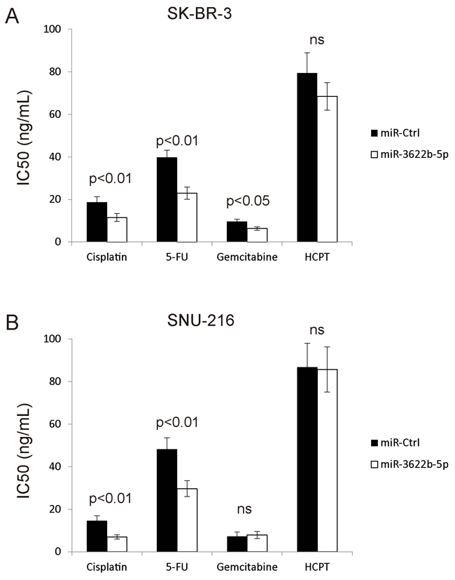 MiR-3622b-5p sensitizes cells to chemotherapy drugs.
