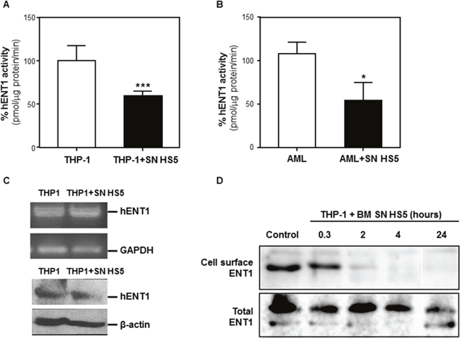 BMSCs secrete soluble factor(s) that decrease ENT1 nucleotide transport protein activity by removing ENT1 from the cell surface.
