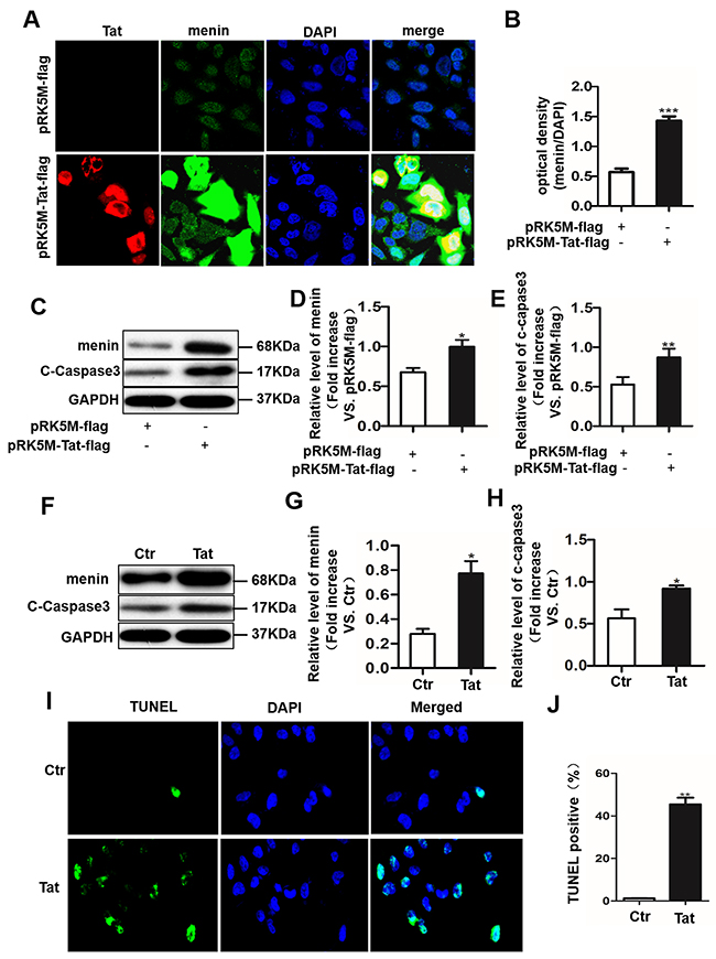 Tat induces cell apoptosis with an enhanced menin expression in SH-SY5Y cells and primary neurons.