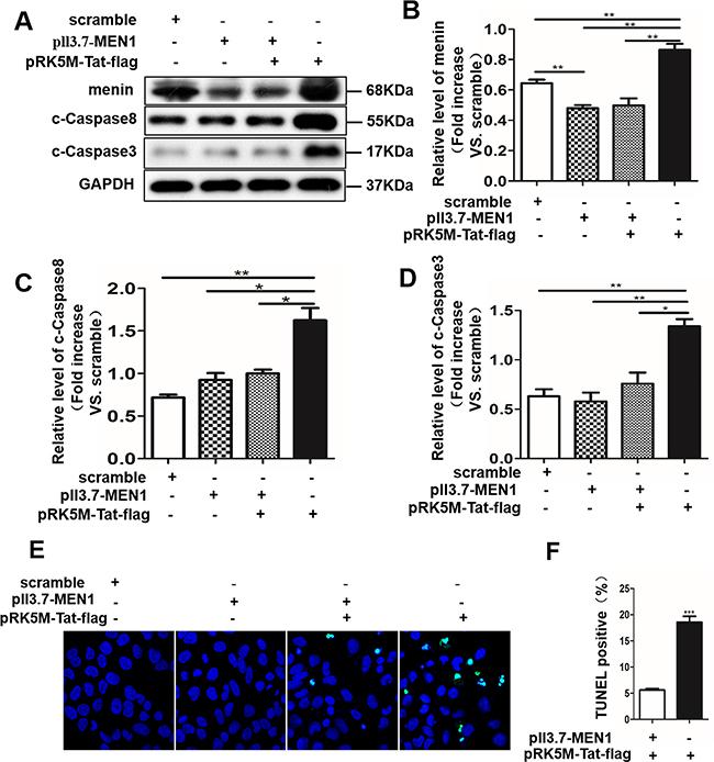 Menin mediates tat-induced apoptosis in SH-SY5Y cells.