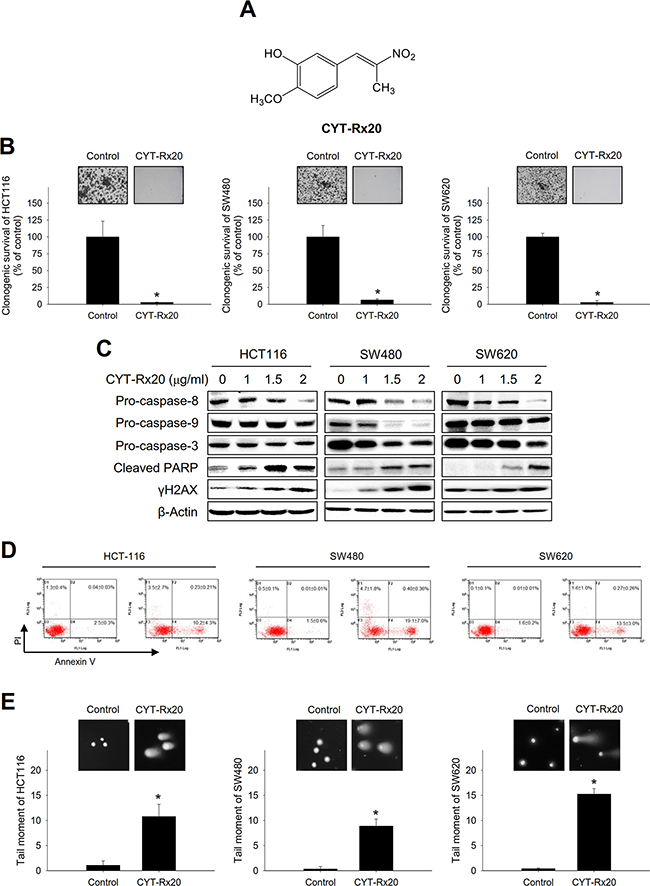 Effects of CYT-Rx20 on cell viability and DNA damage in colorectal cancer cells.