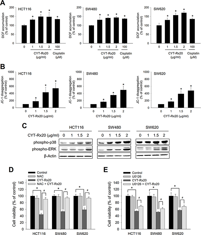 Involvement of ROS accumulation, mitochondrial dysfunction, and MEK/ERK activation in CYT-Rx20-induced cytotoxicity in colorectal cancer cells.