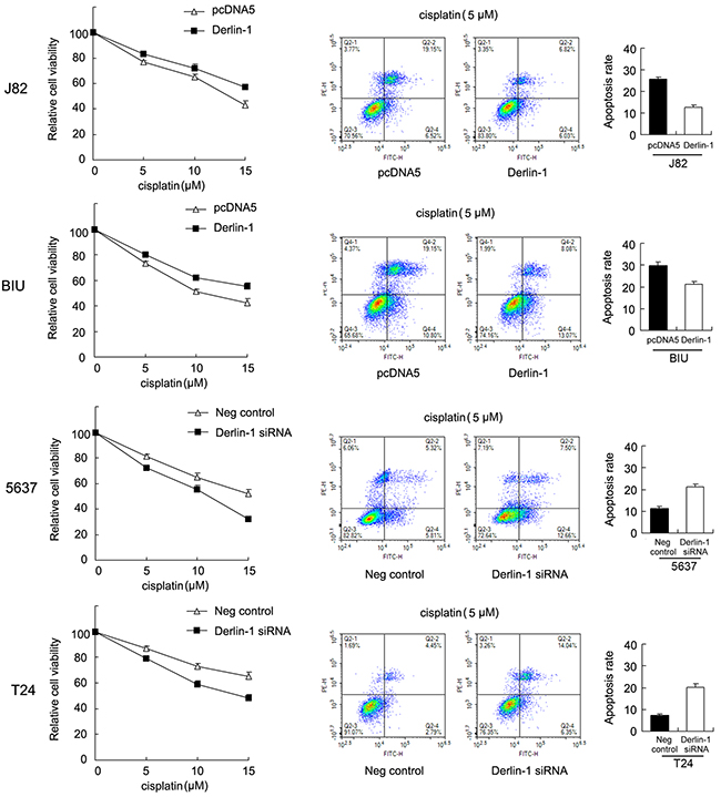 Derlin-1 confers cisplatin resistance in bladder cancer cells.