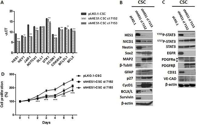 Downmodulation of Hes1 expression affects Notch1 signaling, self-renewal, oncogenic signaling pathways and cell growth rate in shHes1-CSC.