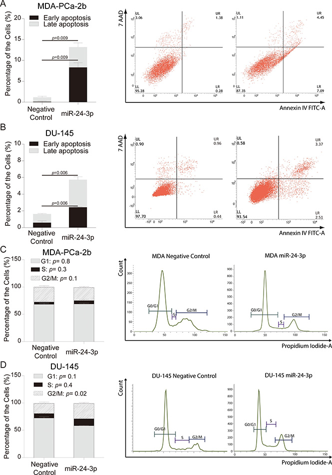miR-24 over-expression and analyses of apoptosis and cell cycle.