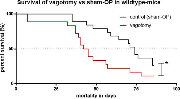 Subdiaphragmatic vagotomy decreased survival.