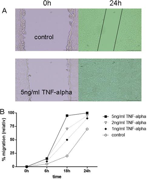 TNFα enhanced migration of 6606PDA tumor cells