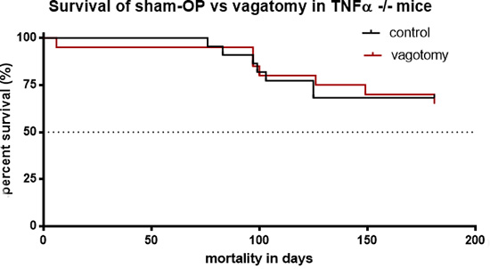 Vagotomy had no significant influence on survival of TNFα deficient mice.