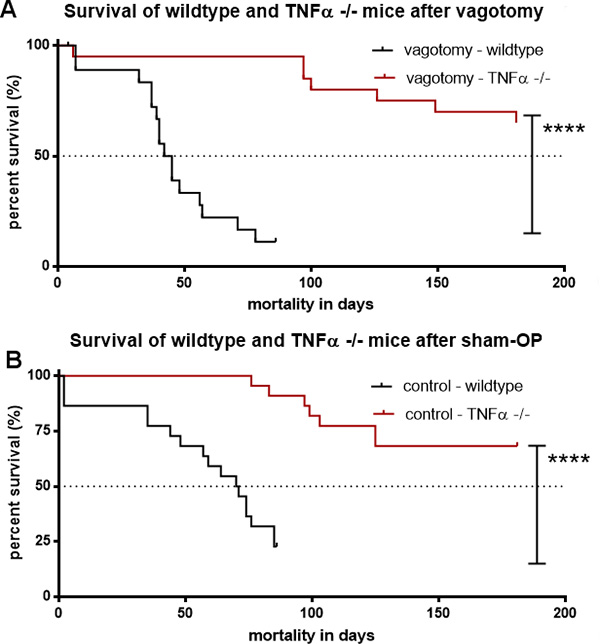 TNFα deficiency abolished the effect of vagotomy on survival in pancreatic cancer.