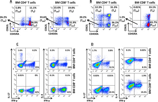 In vitro T-cell Production of IFN-γ.