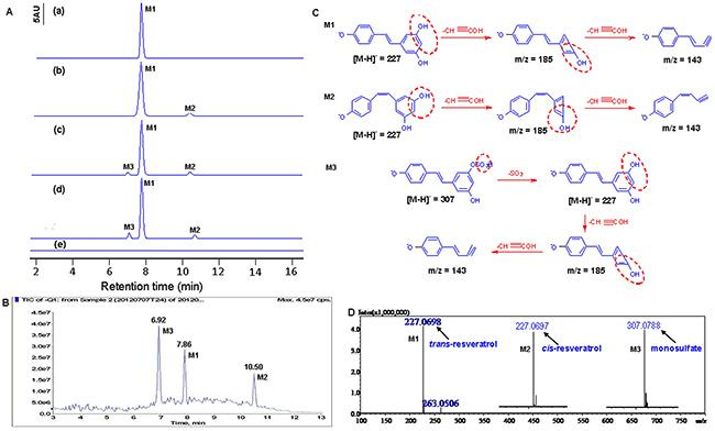 Identification of resveratrol's metabolites in HBC T24 cells.