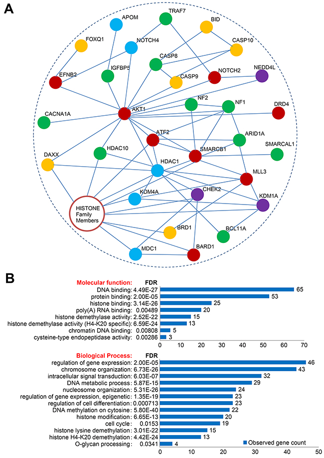 Network and Gene Ontology/pathway analysis of candidate genes.