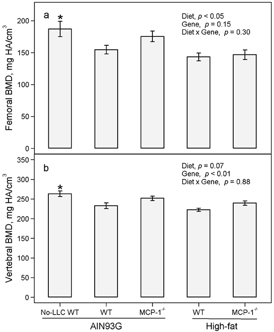 Bone mineral density of femurs and vertebrae of MCP-1-/- and wild-type mice fed the AIN93G or the high-fat diet.
