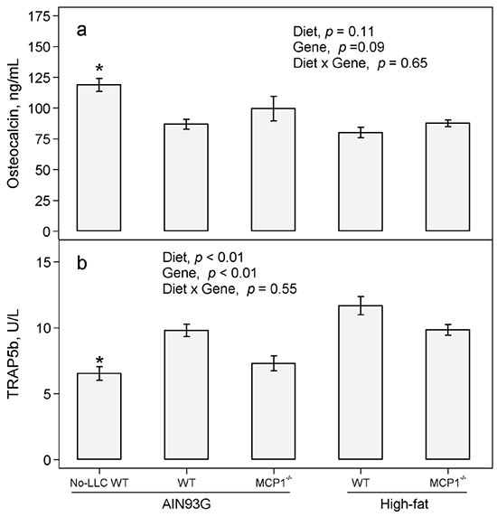 Plasma concentrations of osteocalcin and TRAP 5b in MCP-1-/- and wild-type mice fed the AIN93G or the high-fat diet.