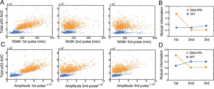 Changes in information flow under DNA-PK inhibition.