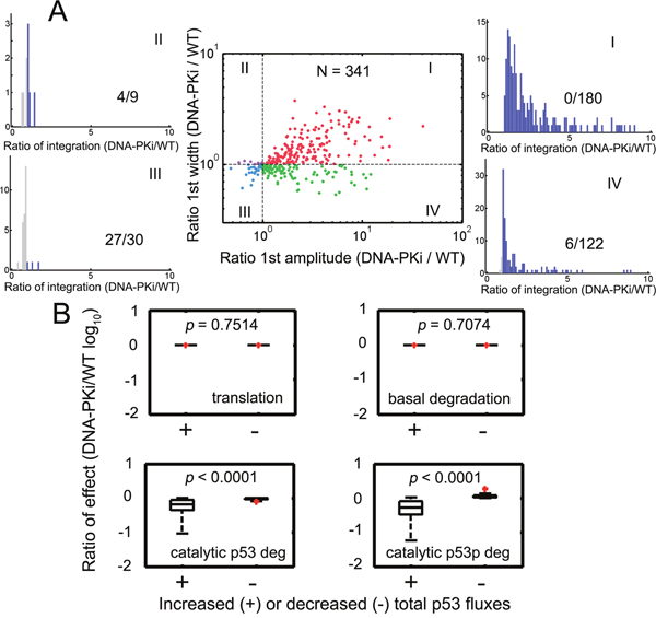 Stochastic parameters identified robust p53 amplification under DNA-PK inhibition.