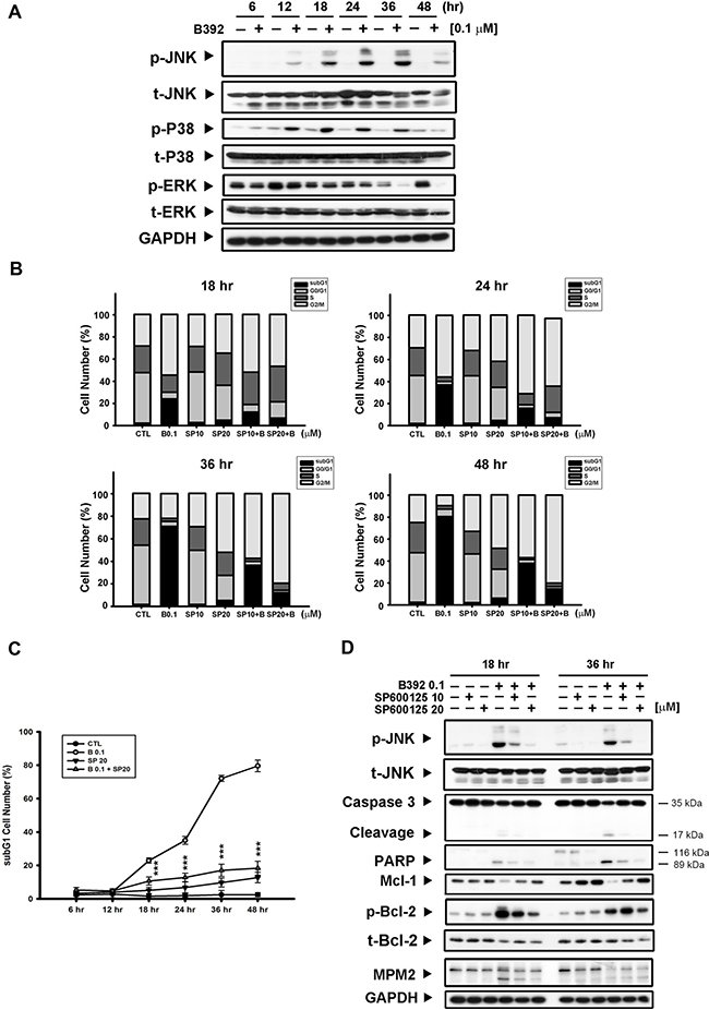 JNK activation was involved in B392-caused cell apoptosis.